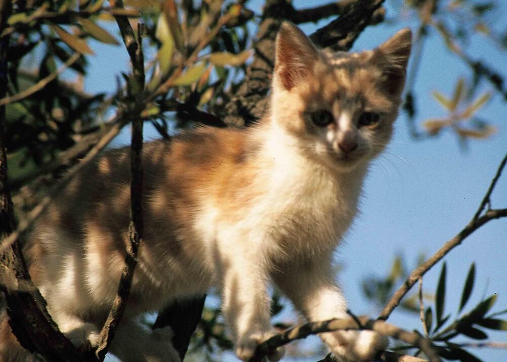 Adventure Cat2 by DJRicho