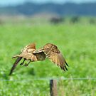 Brown Falcon from the Silver Falcon 2 by Biggzie