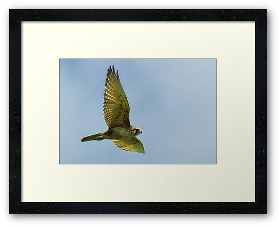 Brown Falcon from the Silver Falcon 3 by Biggzie