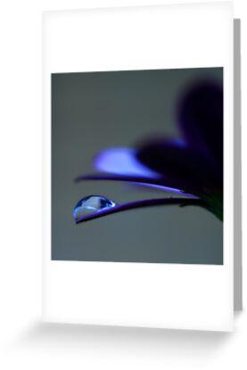 Colour Of Life XXXVIII by Damienne Bingham
