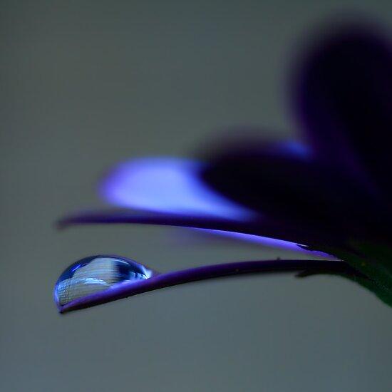 Colour Of Life XXXVIII by Didi Bingham