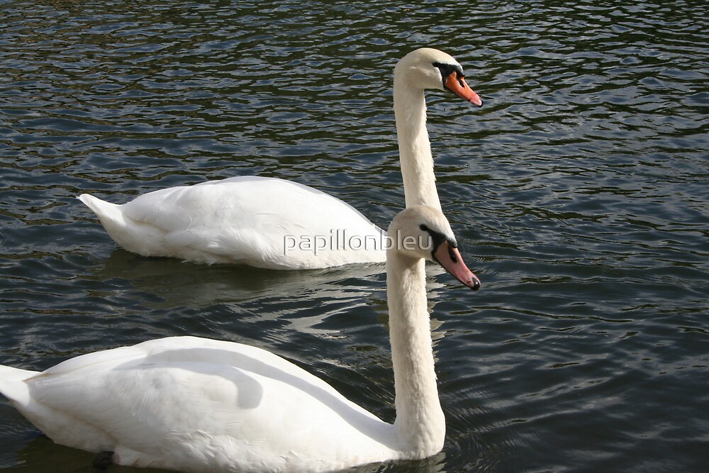 The Swans by Pamela Jayne Smith