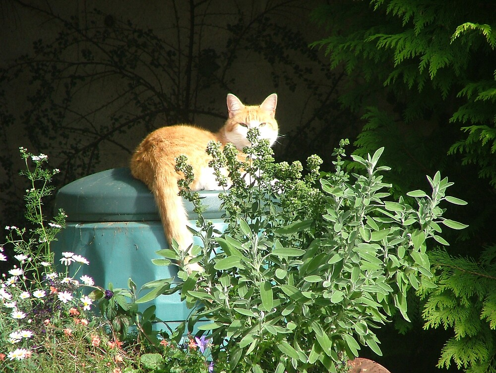 Composted cat by Twscats