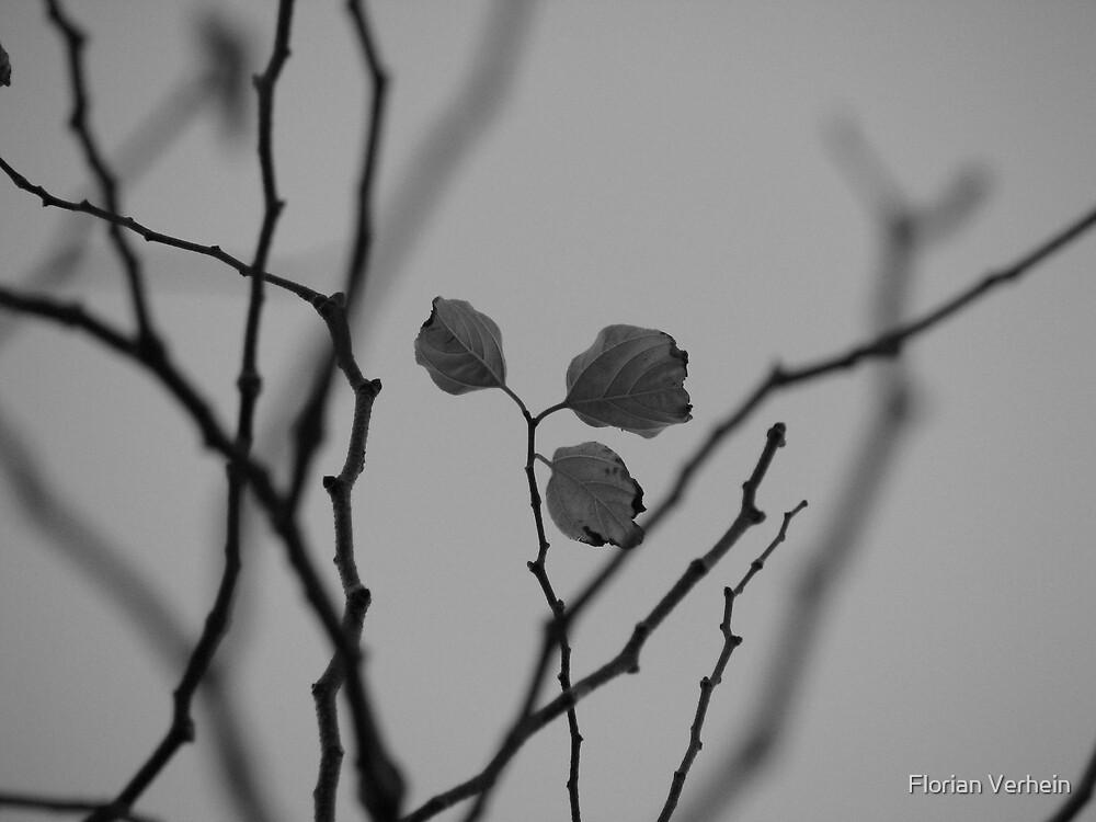 last leaves by Florian Verhein
