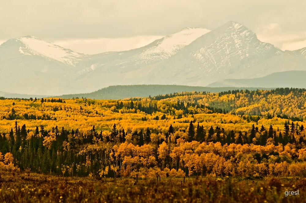 Fall in Alberta by gresl