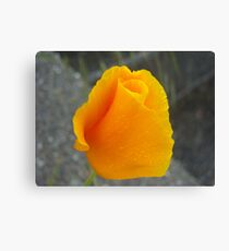 ORANGE CALIFORNIA POPPY Canvas Print