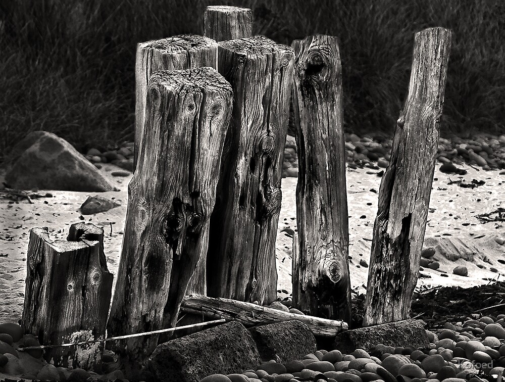 Poles in the Sand by Kofoed