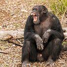 Chimpanzee by SusanAdey