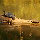 Turtle Family Outing by Richard G Witham