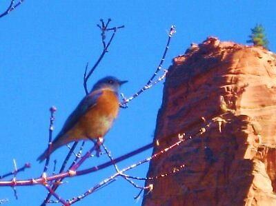Zion Canyon Bluebird by jsmusic