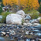 Trees and Stream by Gary Lengyel