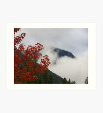 Red Leaves and Mist Art Print