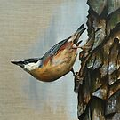 Nuthatch just hanging around by Judith Selcuk