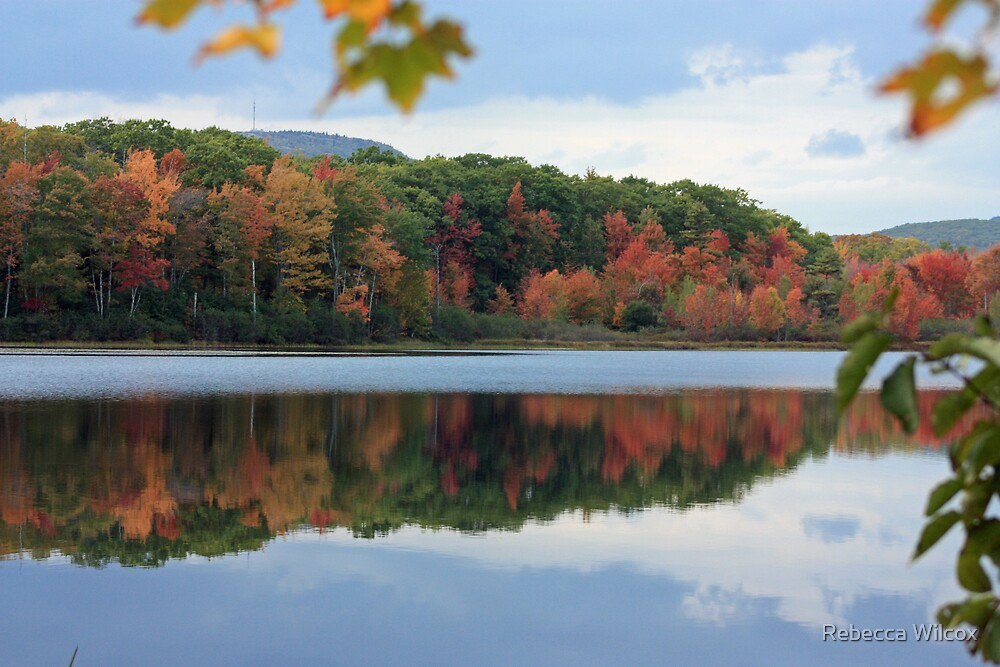 Maine Fall by Rebecca Brann