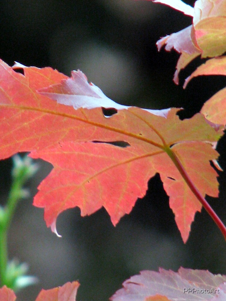Shades of fall by PPPhotoArt