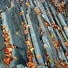 Leaves On the Livermore Overthrust by Wayne King
