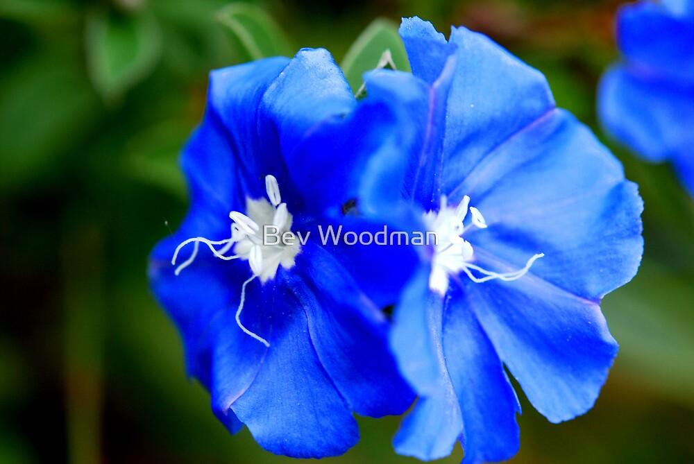 Blue Magic! by Bev Woodman