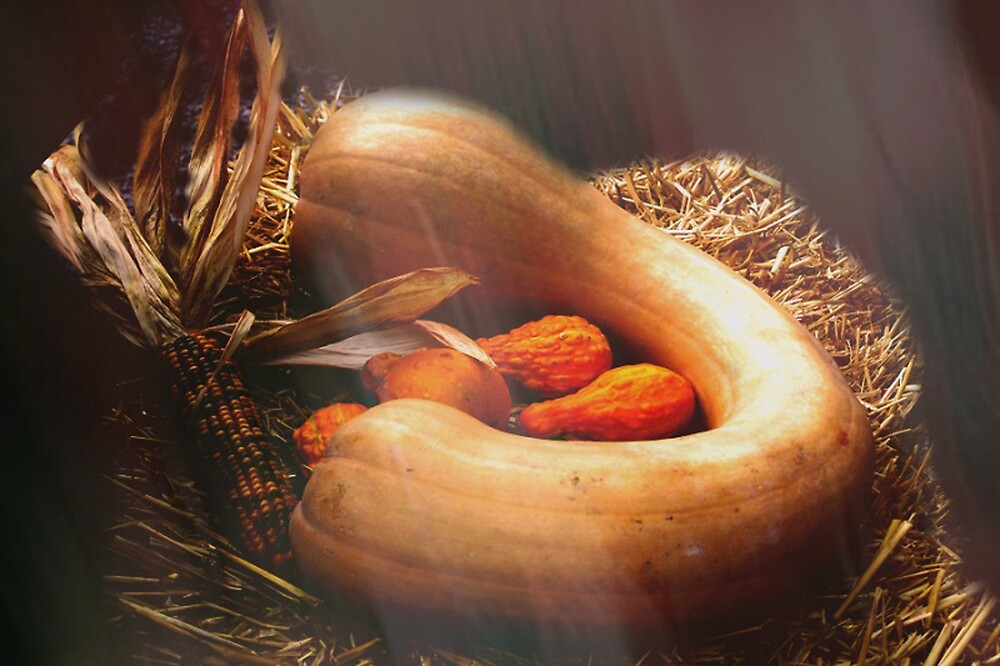 Fall Gourds by Judi Taylor