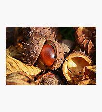 Hatching Photographic Print
