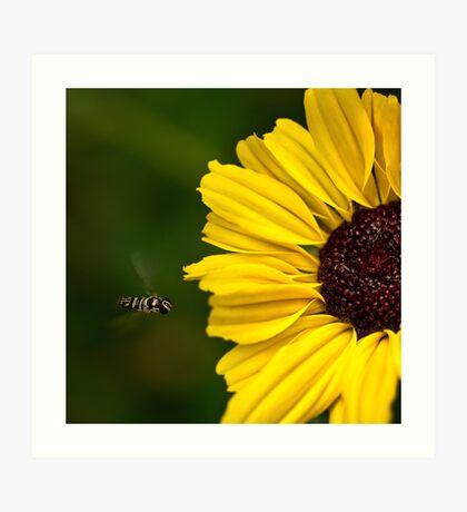 Sonnenblume Landebahn Kunstdruck