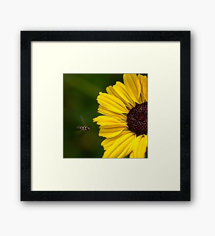 Sonnenblume Landebahn Gerahmtes Wandbild
