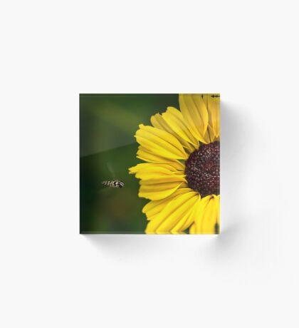 Sonnenblume Landebahn Acrylblock