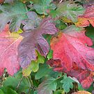 Autumn Leaves_Stokes Bay_Hampshire_England by Kay Cunningham