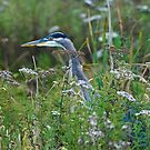 Heron in the Flowers by David Friederich