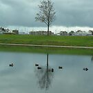Ducks and reflections_Gosport_Hampshire_England by Kay Cunningham