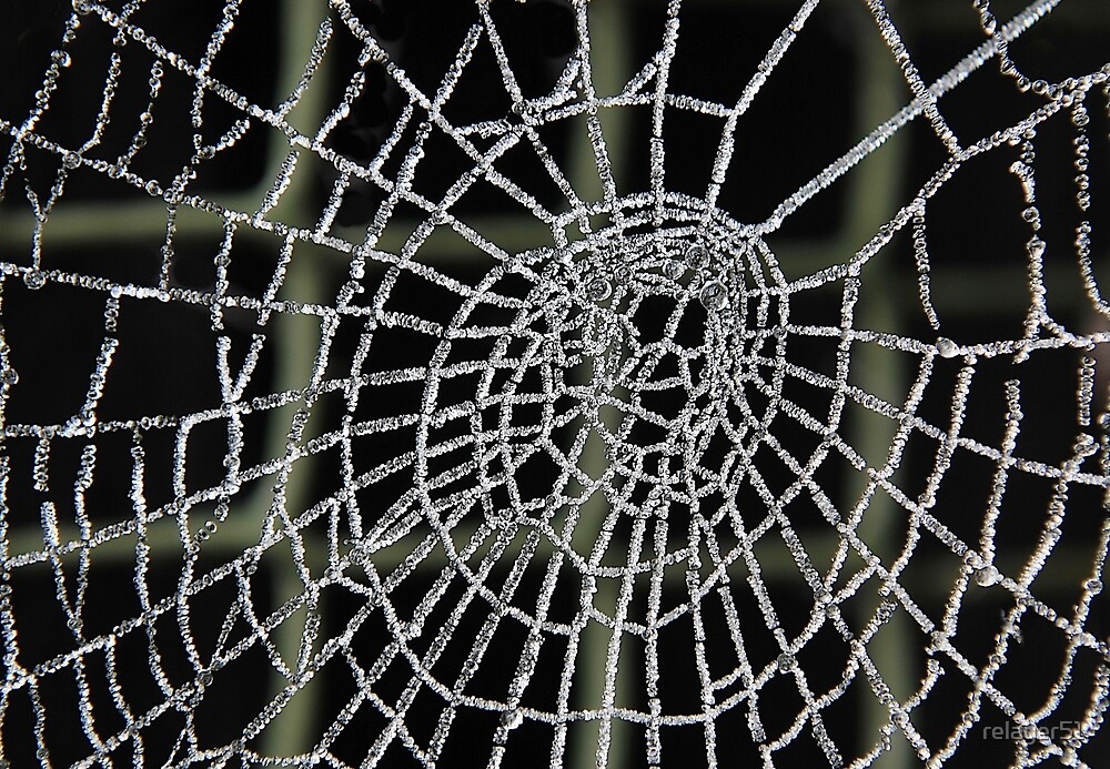 Frozen Spider Web . by relayer51