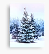 A Cool Pine tree Canvas Print