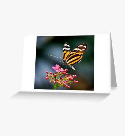 Ithomiidae Greeting Card