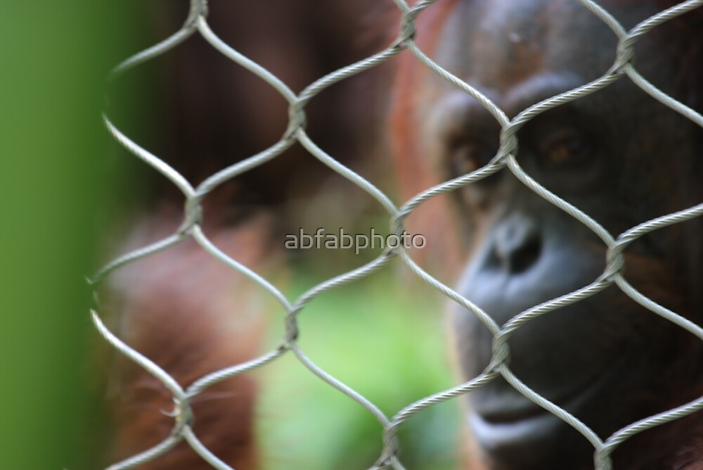 Caged - Why? by abfabphoto