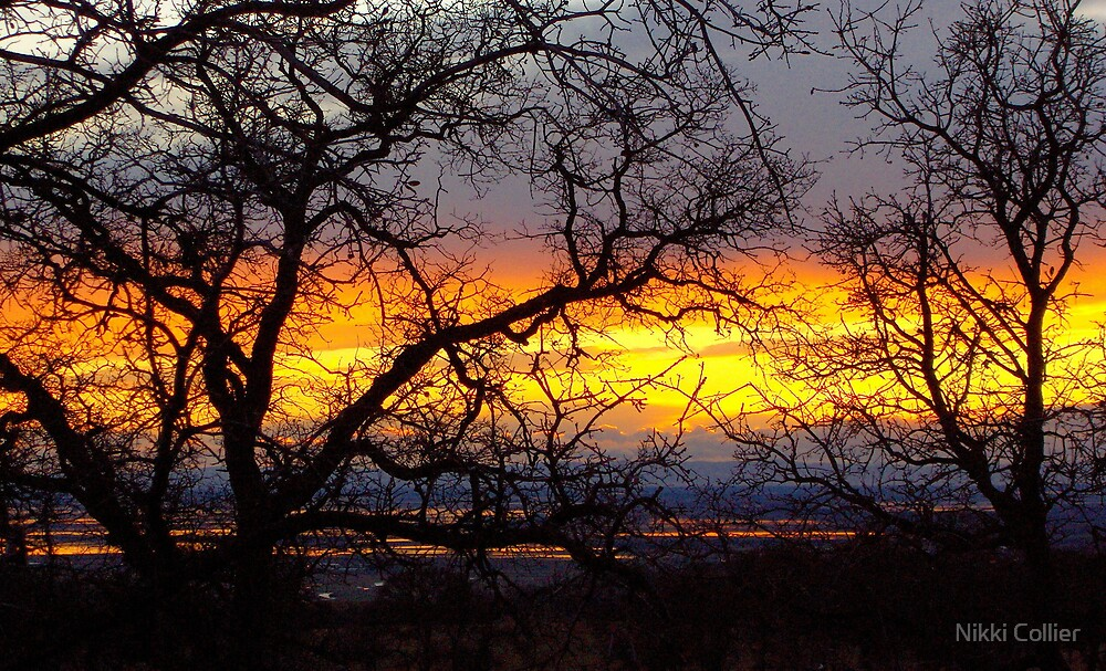 Chico Sunset by Nikki Collier