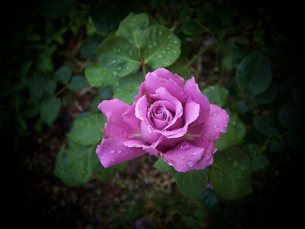 Lone Lavendar Rose by hellion