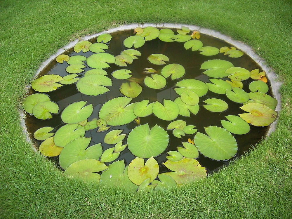small artificial lily pond by PrinceJoy