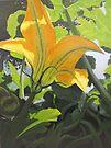 Squash Blossom by Karen Ilari