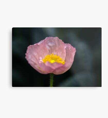 She said her name was Patricia but I call her Poppy Metal Print
