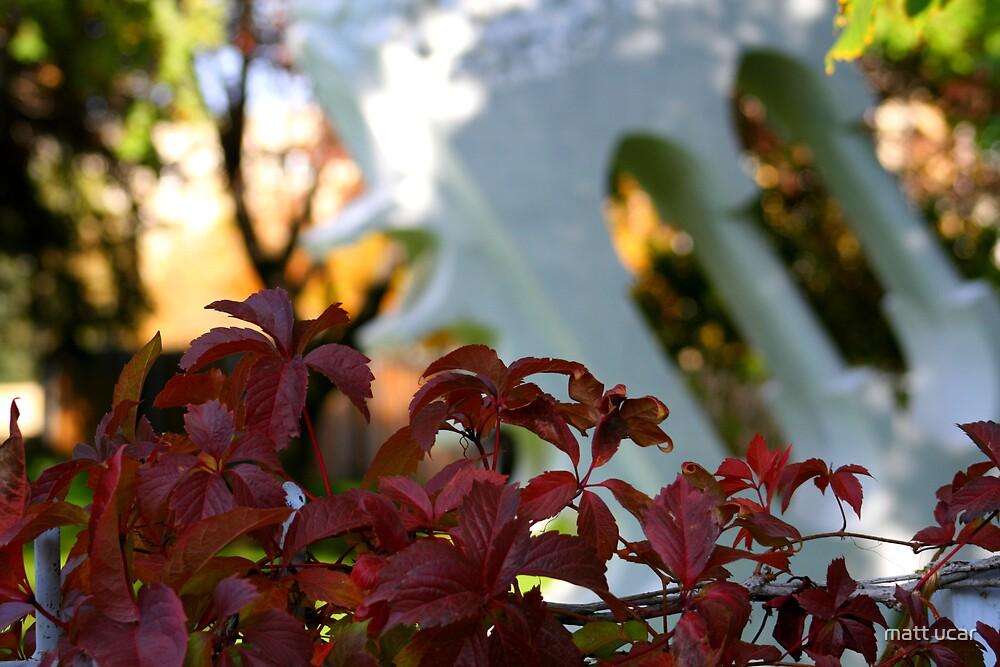 autumn by matt ucar