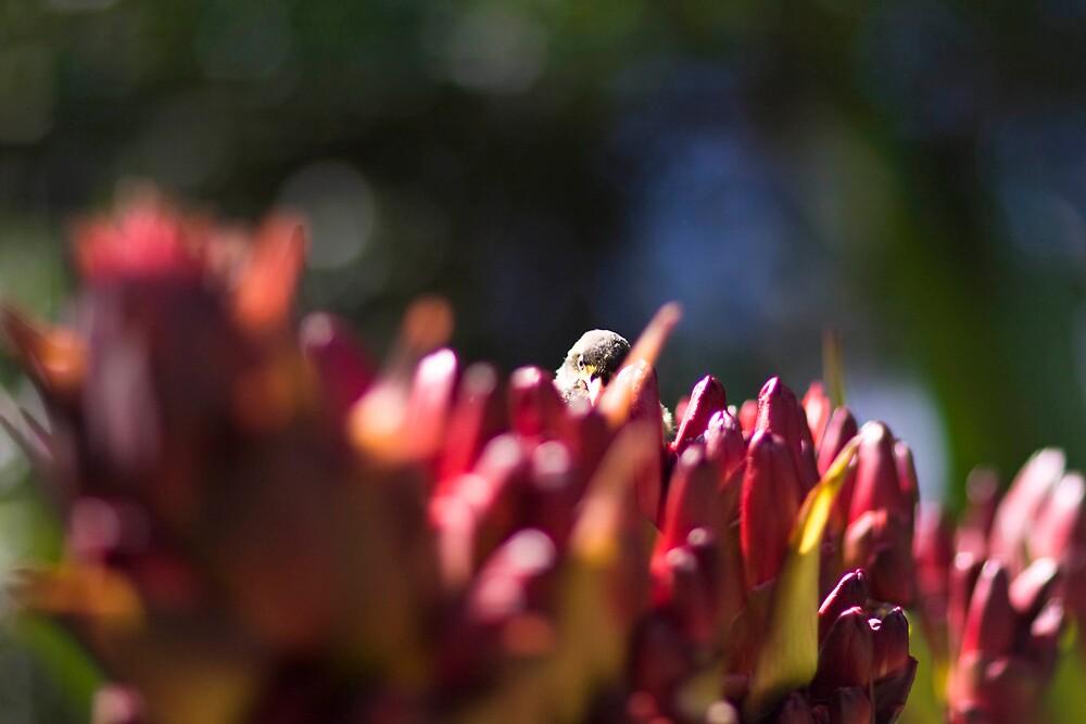 Bird in flowers by Michael Freedman
