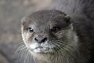 I Otter ... by Cathie Tranent
