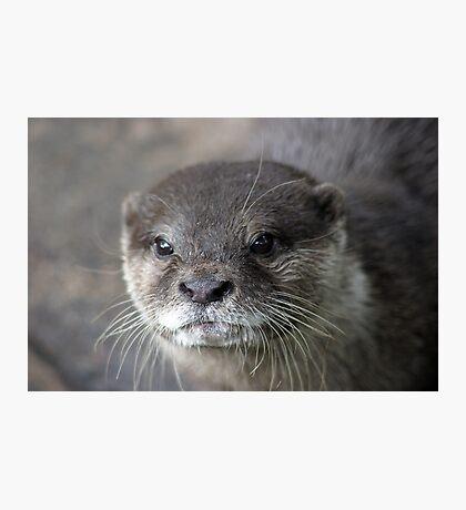 I Otter ... Photographic Print
