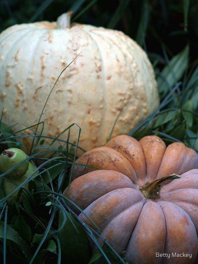 Cinderella Pumpkin by Betty Mackey