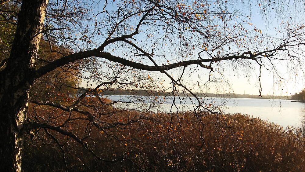 October Birch by linderel