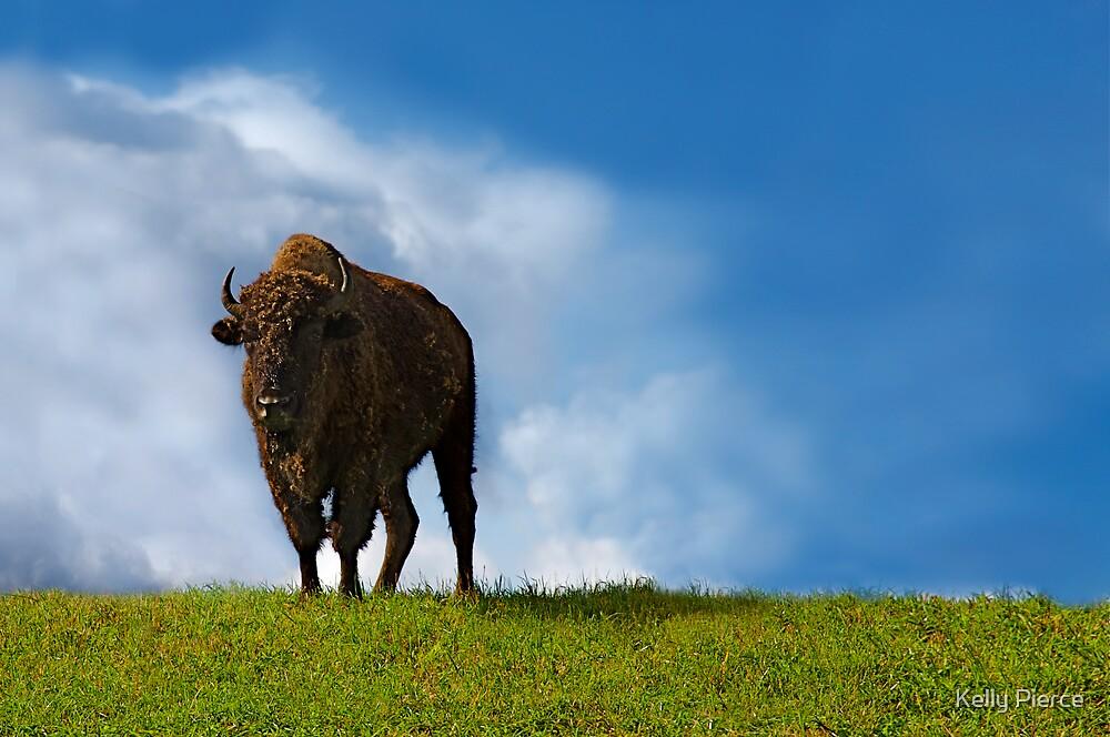 Buffalo by Kelly Pierce
