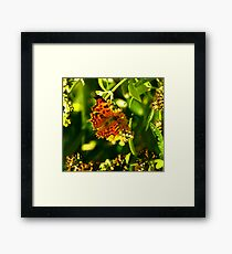 Comma Framed Print