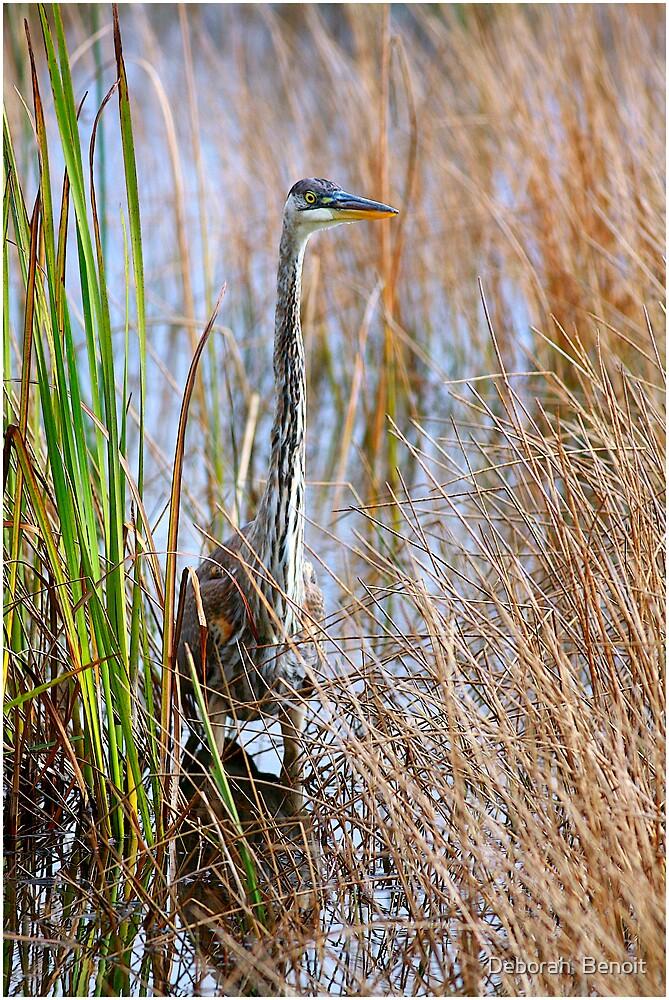 Fishing In The Reeds by Deborah  Benoit