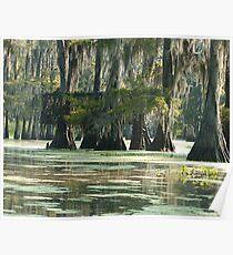 Louisiana Swamp Duck Blind Poster