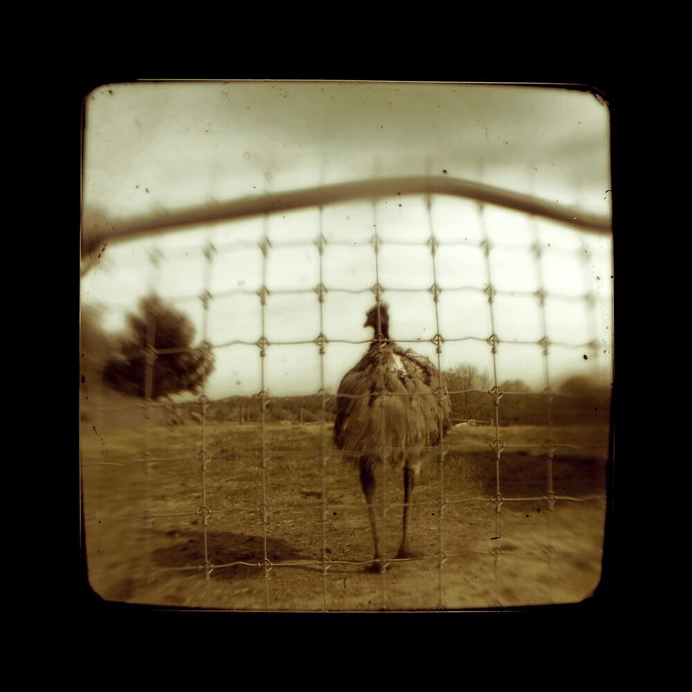 emu by Nina Sabatino