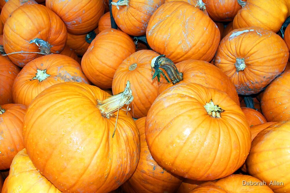 Pumpkins by Deborah  Allen